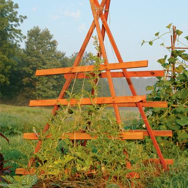 Squash Trellis http   www organicgardening com SquashTrellis. Trellis for Squash Vines   A Bright Ray of Hope
