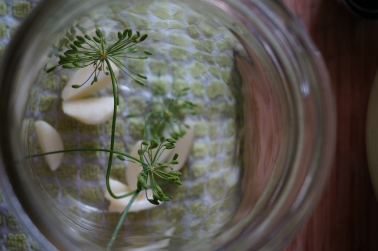 Dill and garlic.