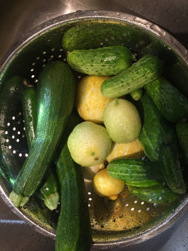 Lemon cucumbers, regular cucumbers, and zucchini.