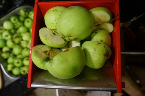 Grinding the apples into little chunks for pressing.